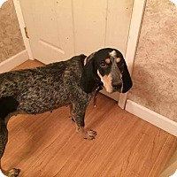 Adopt A Pet :: Sally - whiting, NJ