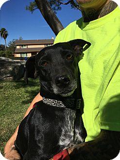 Dachshund Mix Dog for adoption in El Cajon, California - Rosie