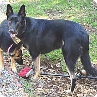 Adopt A Pet :: Aristoo (Ari) - Pleasant Grove, CA
