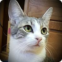 Adopt A Pet :: Simone - Irvine, CA
