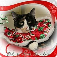 Adopt A Pet :: Judy - Shippenville, PA