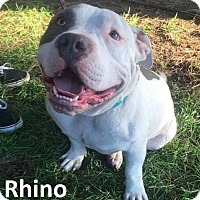Adopt A Pet :: Rhino - Lake Forest, CA