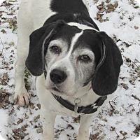 Adopt A Pet :: Trixie - House Springs, MO