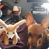 Adopt A Pet :: Zarah/Xena - Indianapolis, IN