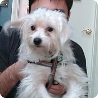 Adopt A Pet :: Eclipse - Thousand Oaks, CA