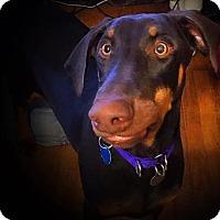 Adopt A Pet :: Mickey - Bristolville, OH
