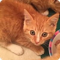 Adopt A Pet :: Nicole Kitman - Gainesville, FL