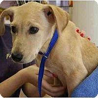 Adopt A Pet :: Melody - Cumming, GA