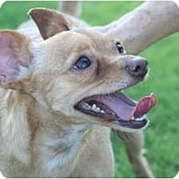 Adopt A Pet :: Coco - Scottsdale, AZ
