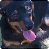 Adopt A Pet :: BUNS - Houston, TX