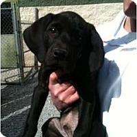 Adopt A Pet :: Moe - Foster, RI
