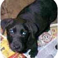 Adopt A Pet :: Rowdy - dewey, AZ