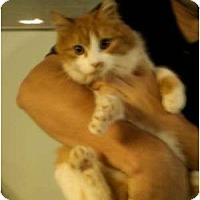 Adopt A Pet :: Mackrel - Troy, OH