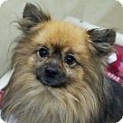 Adopt A Pet :: 18793 - Chico