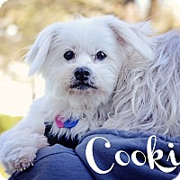 Adopt A Pet :: Cookie - Sheridan, OR