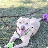 Adopt A Pet :: Bubba Beast - Fresno, CA