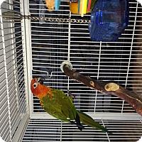 Adopt A Pet :: Mooch & Jem - Punta Gorda, FL
