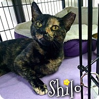 Adopt A Pet :: Shilo - River Edge, NJ