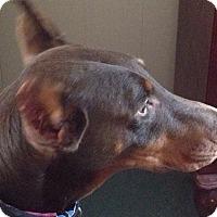 Adopt A Pet :: Zema - New Richmond, OH