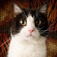 Adopt A Pet :: Rex - St. Charles, IL