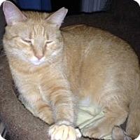 Adopt A Pet :: Jinx - Ephrata, PA
