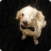 Adopt A Pet :: Nugget - Costa Mesa, CA