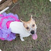 Adopt A Pet :: Lola - West Hartford, CT