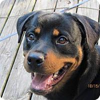 Adopt A Pet :: Sunset - SOUTHINGTON, CT
