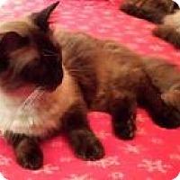Adopt A Pet :: Tribe - Ennis, TX