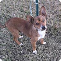 Adopt A Pet :: Shorty - Bonifay, FL