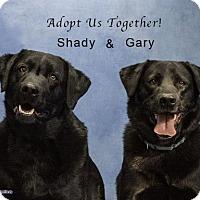Adopt A Pet :: Gary and Shady - Acton, CA