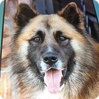 Adopt A Pet :: TUCKER VON TEILER - Los Angeles, CA