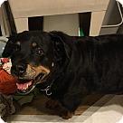 Adopt A Pet :: Jayda
