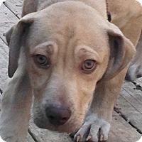 Adopt A Pet :: Georgia - Cincinnati, OH