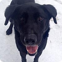 Adopt A Pet :: Graham - Fennville, MI