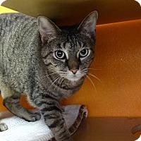 Adopt A Pet :: Italy - Elyria, OH