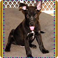 Adopt A Pet :: BILBO BAGGINS - Chandler, AZ