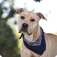 Adopt A Pet :: Lucas - Flint, MI