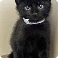 Adopt A Pet :: Chandler - Oswego, IL