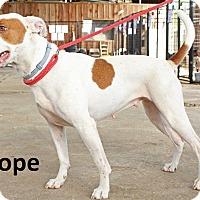 Adopt A Pet :: Hope - Leslie, AR