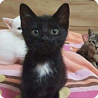 Adopt A Pet :: Ember - Nashville, TN