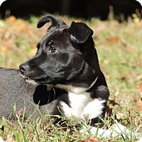 Adopt A Pet :: Dorian (VA) - Virginia Beach, VA