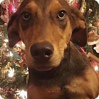 Adopt A Pet :: Bambi - Homestead, FL