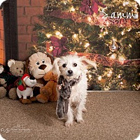 Adopt A Pet :: Sammie - Scottsdale, AZ