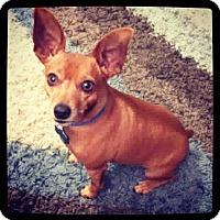 Adopt A Pet :: Oscar - Grand Bay, AL