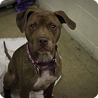 Adopt A Pet :: Adena - New Kensington, PA