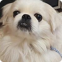 Adopt A Pet :: Blain - Bloomington, IL