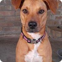 Adopt A Pet :: Scooby - Santa Fe, TX