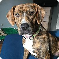 Adopt A Pet :: Reece - Bernardston, MA