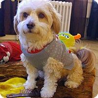 Adopt A Pet :: Ben - Tacoma - Federal Way, WA